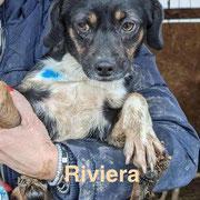 1 Tier in Rumänien durch Namenspatenschaft Riviera, Pro Dog Romania eV
