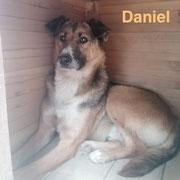 1 Tier in Rumänien durch Namenspatenschaft Daniel, Pro Dog Romania eV