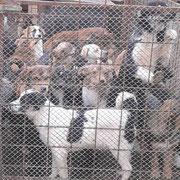 10 Hunde in Rumänien über Pro Dog Romania eV