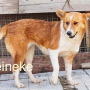 1 Tier in Rumänien durch Namenspatenschaft Reineke Pro Dog Romania eV