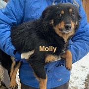 1 Tier in Rumänien durch Namenspatenschaft Molly, Pro Dog Romania eV