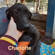 1 Tier in Rumänien durch Namenspatenschaft Charlotte, Pro Dog Romania eV