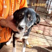 1 Tier in Rumänien durch Namenspatenschaft Lauser, Pro Dog Romania eV