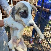 1 Tier in Rumänien durch Namenspatenschaft Alexi, Pro Dog Romania eV