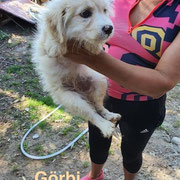 1 Tier in Rumänien durch Namenspatenschaft Görbi, Pro Dog Romania eV