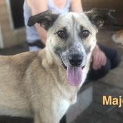 1 Tier in Rumänien durch Namenspatenschaft Major Pro Dog Romania eV
