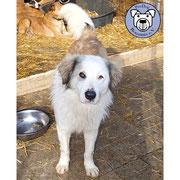 1 Hund in Rumänien durch Namenspatenschaft Mücke, Pro Dog Romania eV