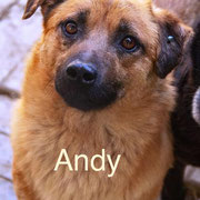 1 Tier in Rumänien durch Namenspatenschaft Andy Pro Dog Romania eV