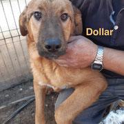 1 Tier in Rumänien durch Namenspatenschaft Dollar, Pro Dog Romania eV