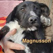 1 Tier in Rumänien durch Namenspatenschaft Magnusson, Pro Dog Romania eV