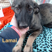 1 Tier in Rumänien durch Namenspatenschaft Lamai, Pro Dog Romania eV