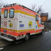 10 Tiere in Rumänien über Tierhilfe Hoffnung eV