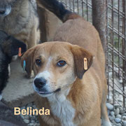 1 Tier in Rumänien durch Namenpatenschaft  Belinda, Pro Dog Romania eV