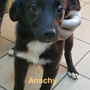 1 Tier in Rumänien durch Namenspatenschaft Anschy, Pro Dog Romania eV