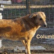 1 Tier in Rumänien durch Namenspatenschaft Columbus, Pro Dog Romania eV
