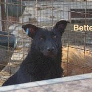 1 Tier in Rumänien durch Namenspatenschaft Bette, Pro Dog Romania eV