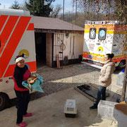 2 Tiere in Rumänien durch Tierhilfe Hoffnung eV