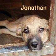 1 Tier in Rumänien durch Namenspatenschaft Jonathan, Pro Dog Romania eV