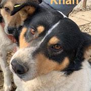 1 Tier in Rumänien durch Namenspatenschaft Khan, Pro Dog Romania eV
