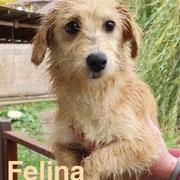 1 Tier in Rumänien durch Namenspatenschaft Felina, Pro Dog Romania eV