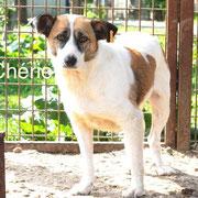 1 Tier in Rumänien durch Namenspatenschaft Chérie Pro Dog Romania eV