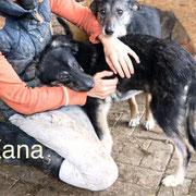 1 Tier in Rumänien durch Namenspatenschaft Kana Pro Dog Romania eV