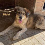 1 Tier in Rumänien durch Namenspatenschaft Michi, Pro Dog Romania eV