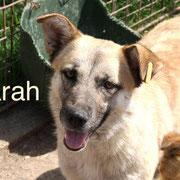 1 Tier in Rumänien durch Namenspatenschaft Farah Pro Dog Romania eV
