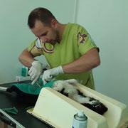 1 Tier in Rumänien durch Pro Dog Romania eV