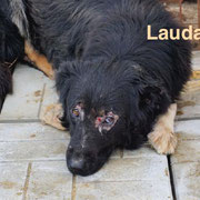 1 Tier in Rumänien durch Namenspatenschaft Lauda, Pro Dog Romania eV