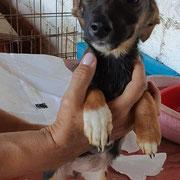 1 Tier in Rumänien durch Namenspatenschaft Samba, Pro Dog Romania eV