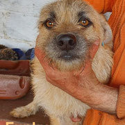 1 Tier in Rumänien durch Namenspatenschaft Funky, Pro Dog Romania eV