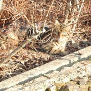 Namenlose Streunerkatze, Katzenhilfe Yuma & Co, Nagold
