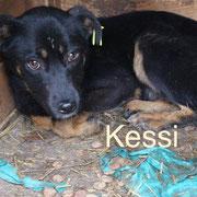 1 Tier in Rumänien durch Namenspatenschaft Kessi Pro Dog Romania eV