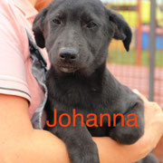 1 Tier in Rumänien durch Namenspatenschaft Johanna, Pro Dog Romania eV