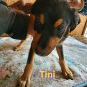 1 Tier in Rumänien durch Namenspatenschaft Tini, Pro Dog Romania eV