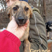 1 Tier in Rumänien durch Namenspatenschaft Gerlinde Pro Dog Romania eV