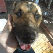 1 Tier in Rumänien durch Namenspatenschaft Stevie, Pro Dog Romania eV