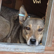 1 Tier in Rumänien durch Namenspatenschaft Vivi, Pro Dog Romania eV