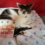 1 Katze bei Svetlana in Abakan/Russland über Tierhilfe Bluemoon & Pfötchenfreunde eV