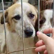 1 Tier in Rumänien durch Namenspatenschaft Snowflake, Pro Dog Romania eV