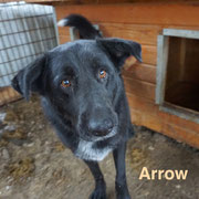 1 Tier in Rumänien durch Namenspatenschaft Arrow, Pro Dog Romania eV