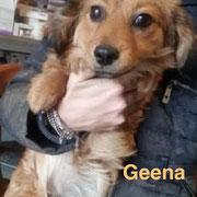 1 Tier in Rumänien durch Namenspatenschaft Geena, Pro Dog Romania eV