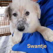 1 Tier in Rumänien durch Namenspatenschaft Swantje, Pro Dog Romania eV