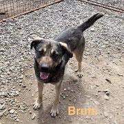 1 Tier in Rumänien durch Namenspatenschaft Bruni, Pro Dog Romania eV
