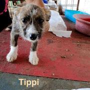 1 Tier in Rumänien durch Namenspatenschaft Tippi, Pro Dog Romania eV