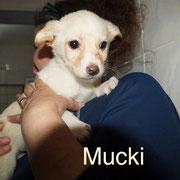 1 Tier in Rumänien durch Namenspatenschaft Mucki, Pro Dog Romania eV