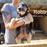 1 Tier in Rumänien durch Namenspatenschaft Robby, Pro Dog Romania eV
