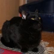 Katze Lisa durch Hilfe für Samtpfoten & Co in Not eV