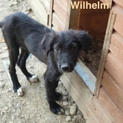 1 Tier in Rumänien durch Namenspatenschaft Wilhelm, Pro Dog Romania eV